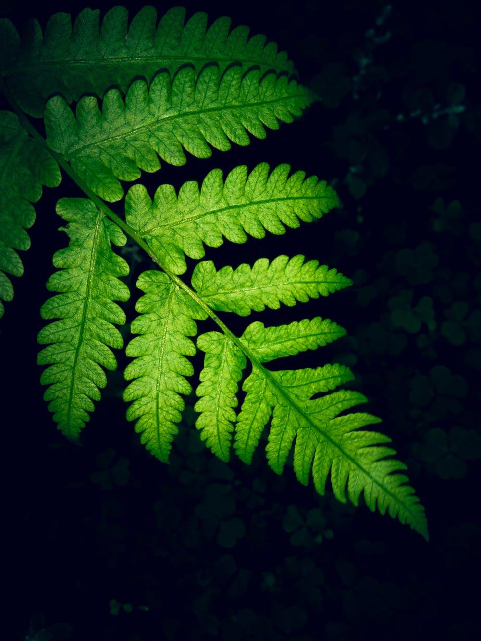 close up photo of green fern leaf